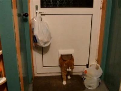 Cea mai grasuna pisica se chinuie sa treaca prin usa speciala pentru ea