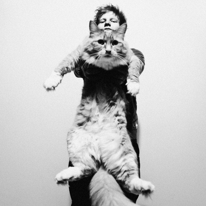 """VIDEO: In noul sau clip, """"Drunk"""", Ed Sheeran isi ineaca amarul in bautura alaturi de… o pisica!"""