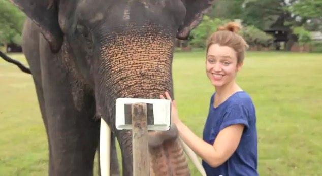 Ce poate face un elefant cu un Samsung Note!