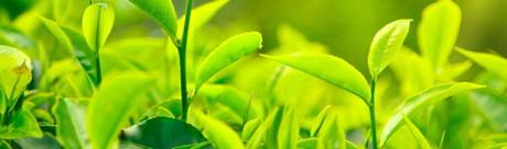 5 lucruri pe care ar trebui sa le stiti despre ceaiul verde